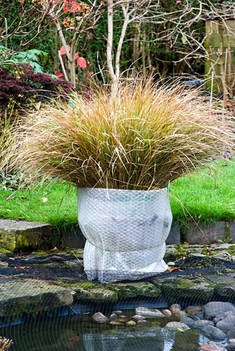 Ornamental grass in a pot insulated from frost by bubblewrap gap ornamental grass in a pot insulated from frost by bubblewrap workwithnaturefo