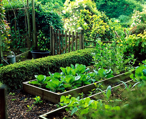 Vegetable garden - © Leigh Clapp/GAP Photos