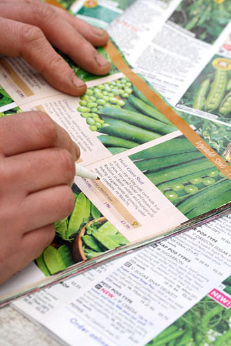 Gardener selecting pea varieties in a seed catalogue - © Maxine Adcock/GAP Photos