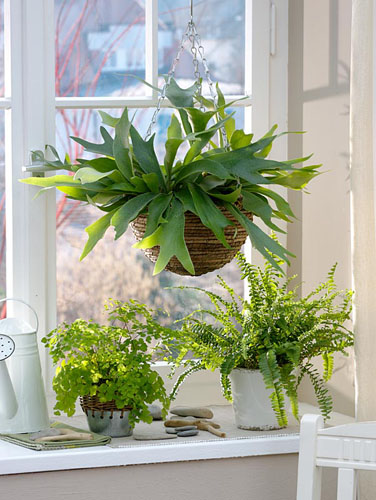 Hanging basket and container plants on windowsill