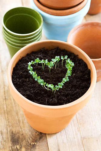 Heart shape of cress growing in pot with compost - © Victoria Firmston/GAP Photos