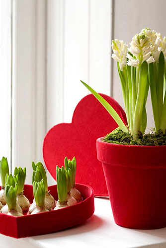 White Hyacinths in heart shaped tray - © Matteo Carassale/GAP Photos