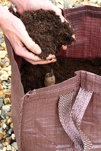 Planting seed potatoes 'Charlotte' in a growing bag - © Maxine Adcock/GAP Photos