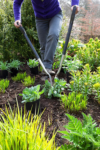 Carol Klein dividing a rudbeckia whilst planting out summer flowering plants into a gap in the border. Achillea 'Fanal' syn. 'The Beacon', Rudbeckia fulgida var. deamii, Iris pseudacorus and Rheum - © Jonathan Buckley/GAP Photos