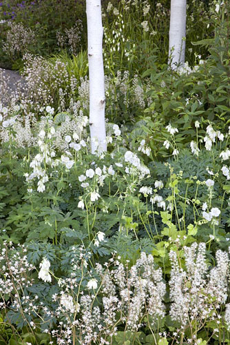 Betula utilis var. 'jacquemontii', Astrantia major 'White Giant', Tiarella cordifolia, Geranium phaeum 'Album', Dicentra spectabilis and Saxifraga umbrosa. The Cancer Research UK Garden, Gold Medal Winner RHS Chelsea Flower Show 2010 - © Elke Borkowski/GAP Photos