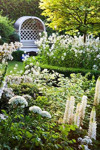 White garden with Acer pseudoplatanus 'Brilliantissimum', Hesperis matronalis alba, Allium multibulbosum syn. Allium nigrum, Lupinus, Philadelphus coronarius 'Variegatus', Olearia, Iberis - White Candytuft. Mathern House, Mathern, Monmouthshire, Wales. Early June. Garden opens for National Gardens Scheme - © Charles Hawes/GAP Photos