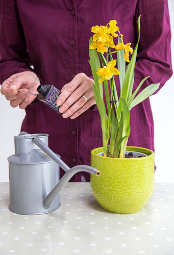 Orchid Care for Orchid Cambria. Adding special Orchid formula to water - © GAP Photos