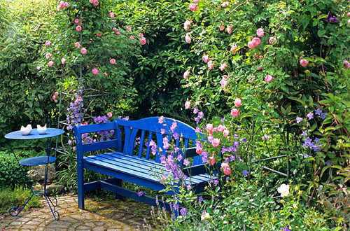 Blue bench between roses with small table - © Elke Borkowski/GAP Photos