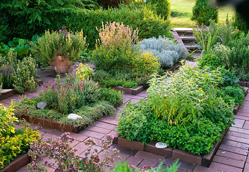 Herb garden with Mentha, Aloysia triphylla, Thymus, Lavandula, Satureja, Helichrysum, Origanum and Hyssopus - © Friedrich Strauss/GAP Photos