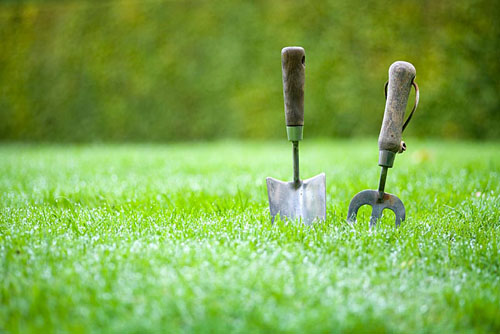 Stainless steel hand fork and trowel in lawn with morning dew - © Lee Avison/GAP Photos