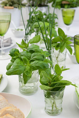 Glasses with Basil leaves used as table decorations - © Simone Augustin/GAP Photos