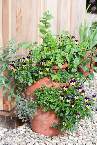 Finished herb planter with Violas - © GAP Photos