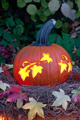 Pumpkin carved with floral pattern - © Elke Borkowski/GAP Photos