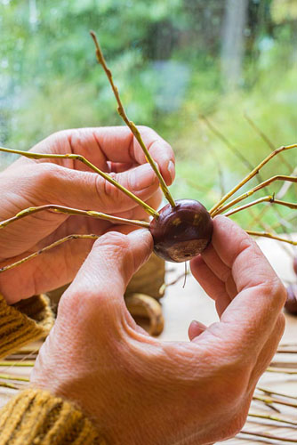 Creating Conker spiders for halloween decorations. Threading fishing line through centre hole - © GAP Photos