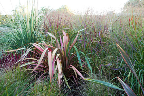 Cortaderia, Phormium, Imperata cylindrica 'Rubra' and Panicum 'Rehbraun' in autumn border - Farrs, Dorset - © Abigail Rex/GAP Photos