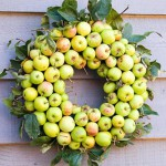 Autumn wreath made from Malus sylvestris - Wild crab apples