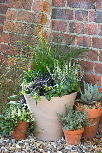 Winter container with Carex, Calluna vulgaris 'Alicia' and Ophiopogon planiscapus 'Niger' - © GAP Photos