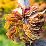Wreath of Acer rufinerve leaves