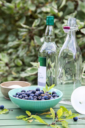 Homemade Sloe Gin. Sloe, Sugar and Gin - © GAP Photos