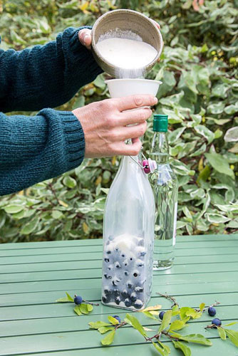 Homemade Sloe Gin. Sloe, Sugar and Gin. Pouring sugar over fruit in bottle - © GAP Photos