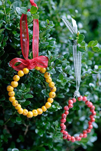 Christmas decorations made from red and orange Pyracantha berries hung from ribbons in box shrub