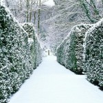 The Yew Walk covered in snow. Veddw House Garden