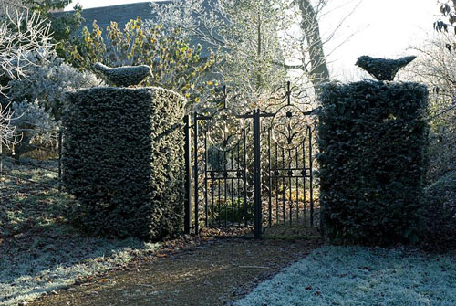 Taxus - Yew pillars with topiary yew birds and decorative iron gate leading to the Moat Garden with frost in December - © Zara Napier/GAP Photos