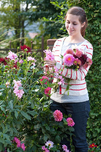 Woman cutting Dahlias - © Friedrich Strauss/GAP Photos