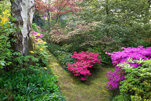 Pathways in the woodland garden at Greencombe with Rhododendrons and ...