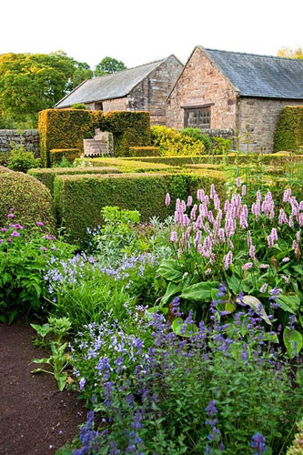 The Flower Garden features strong blocks of box and yew that frame cottage garden plants and flowers includig Persicaria, Viola cornuta and knapweed - Herterton House, Hartington, Northumberland, UK - © Carole Drake/GAP Photos