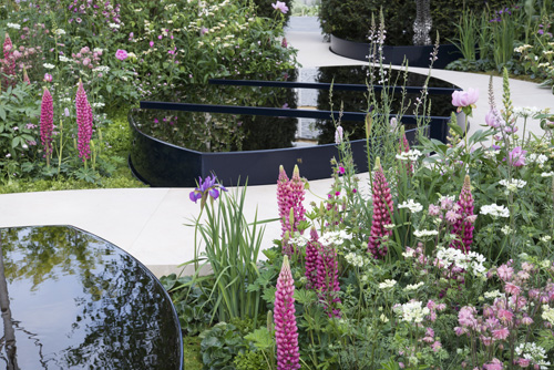 Soft pink planting of Lupinus, Aquilegia and Paeonia with Orlaya grandiflora surround black water pools - The Breakthrough Breast Cancer Garden, RHS Chelsea Flower Show 2015 - Design: Ruth Willmott, Sponsor: Breakthrough Breast Cancer - © Heather Edwards/GAP Photos