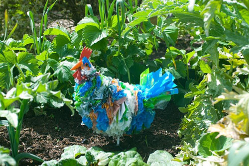 Plastic chicken bird scarer in vegetable bed