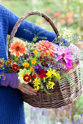 Woman holding basket of flowers - Aster, Dahlia, Asparagus, Tagetes and Anethum graveolens