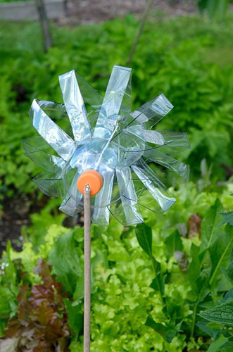 Bird scarer constucted from plastic drink bottle, designed to rotate in wind by cutting.