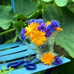 Cut garden flowers - marigolds and cornflowers