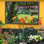 Mirrored wall reflects far border of pink tulips, seen through bed of orange Tulipa 'Ballerina'.