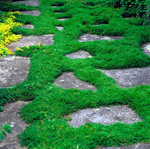 Randomly laid stone is edged in thick bands of chamomile which, when walked on, release a distinctive aroma