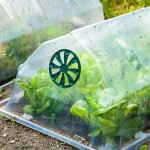 Cloches over lettuces