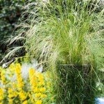 Step by step - Carex comans 'Frosted Curls' in turf pot