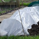 Cloche warming soil up for planting