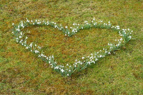 Planting a snowdrop heart - The snowdrop heart flowering in early March - © Maxine Adcock/GAP Photos