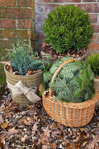 Winter protection. Tender plants placed in wicker basket, insulated with autumnal leaves, protected from the wind with christmas tree branches. Pot plants wrapped with warm insulative material and filled with autumnal leaves for warmth - © GAP Photos