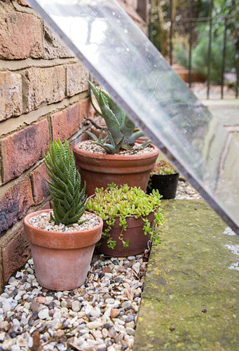 Protecting Succulents from harsh weather conditions with Perspex (methyl methacrylate) - © GAP Photos