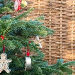 Cookie cutter and pine cone bird feeders hanging from a Christmas tree