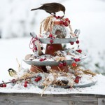 Turdus merula - Blackbird and Parus major -great tit on tiered bird feeder in snow covered garden