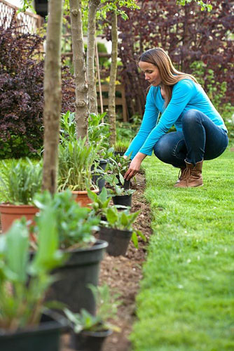 Creating a new perennials border under apple trees. Woman planning and setting out plants in their containers to find the best arrangement and correct spacing. Knautia arvensis, Pennisetum alopecuroides, Salvia pratensis, Panicum vulgare 'Northwind' - © Robert Mabic/GAP Photos