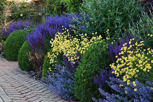 Small herbaceous border with Anthemis tinctoria 'Sauce Hollandaise', Salvia nemorosa 'Ostfriesland', Nepata faassenii 'Walker's Low' - © John Glover/GAP Photos