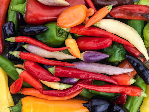 Capiscum annuum - A collection of small chilli peppers, in shades of green, purple, yellow, cream, red and orange - hot, medium and mild