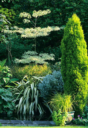 Cornus controversa, Phormium, Senecio and Conifer. The Garden House - © S&O/GAP Photos