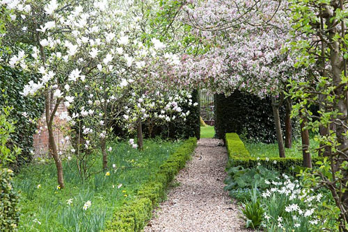 Prunus and Magnolia in flower next to formal pathway - West Green House, Hampshire - © Abigail Rex/GAP Photos